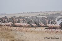 Flamingos and seals
