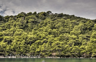 Tree-rich Mljet island